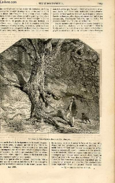 Le musée des familles - lecture du soir -  livraison n°32 - Les mémories d'un chêne par Mangin,suite.