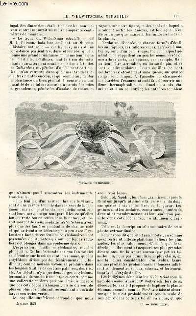 Le musée des familles - édition populaire hebdomadaire-  livraison n°12 - Le lion de Camors,suite par Louis de Carters.