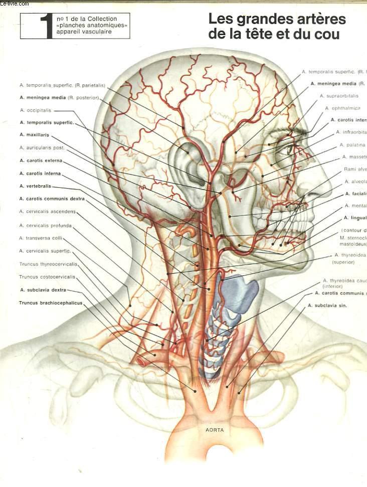livres occasion anatomie humaine en stock dans nos locaux envoi sous 24h le livre. Black Bedroom Furniture Sets. Home Design Ideas