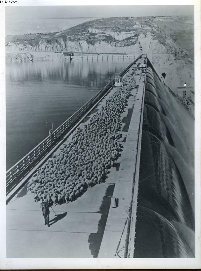 1 PHOTO ANCIENNE SITUEE - TROUPEAU DE MOUTON TRAVERSE LE BARRAGE DE GRAND COULEE