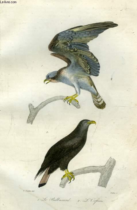 Oeuvres complètes de Buffon.  Les Oiseaux.