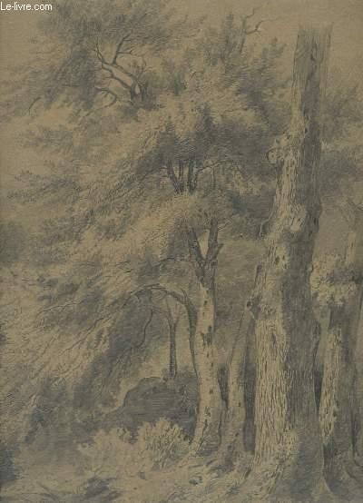 Dessin original en noir et blanc, d'une forêt