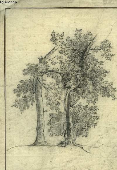 Dessin original, au crayon,  de 2 arbres isolés, dont un avec une branche coupée.