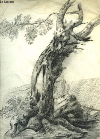 Dessin original au fusain, d'un tronc d'arbre, penché vers la droite