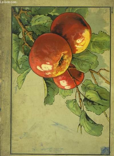 Album de fruits, à colorier.